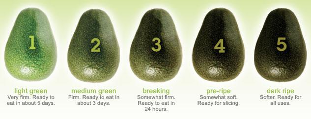 avocado_ripeness_chart